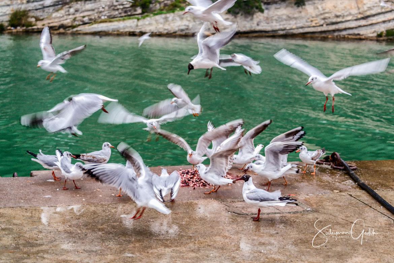 Agva Istanbul Turkey Seagull